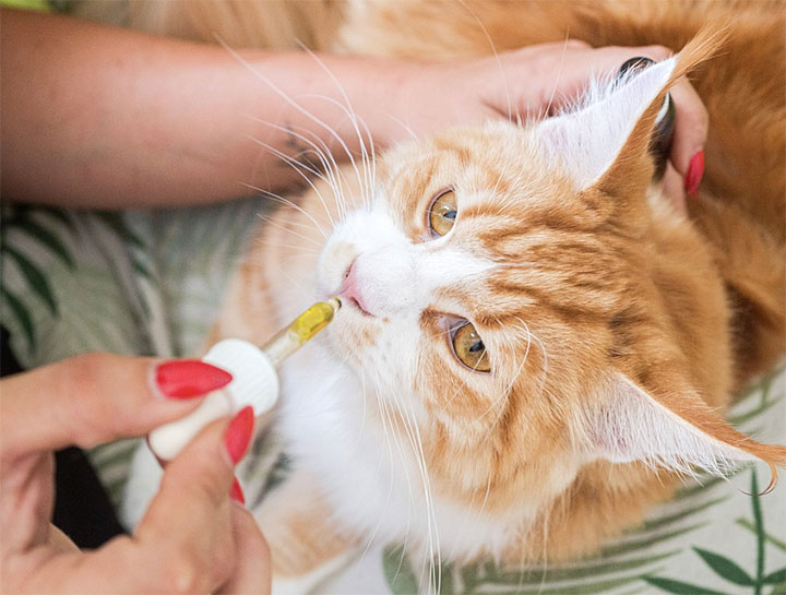 How To Medicate Your Cat